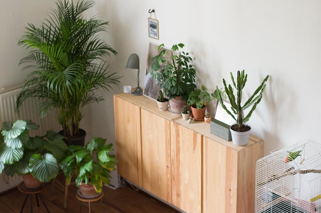 Kast en planten crop